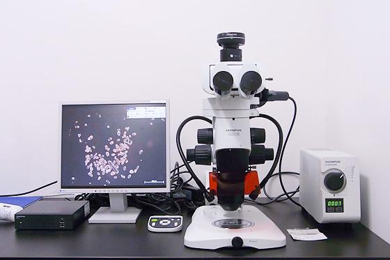 UV stereomicroscope(Olympus SZX16・U-HGLGPS)